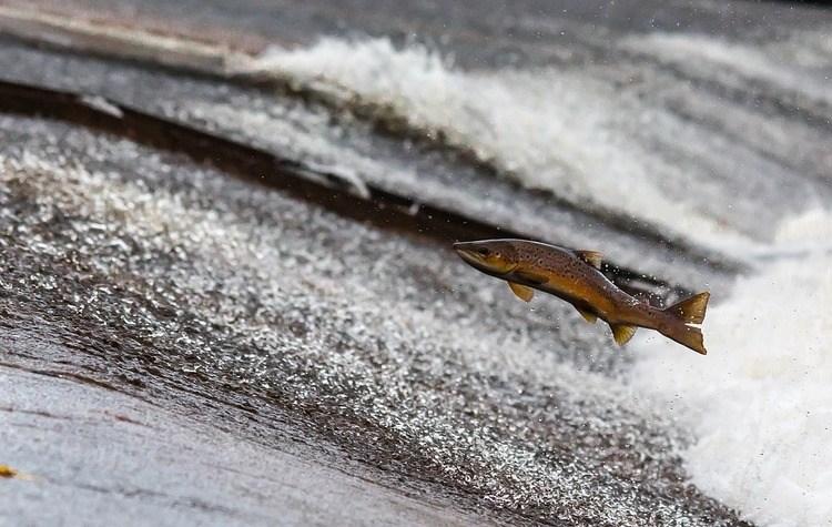 salmon-omega3